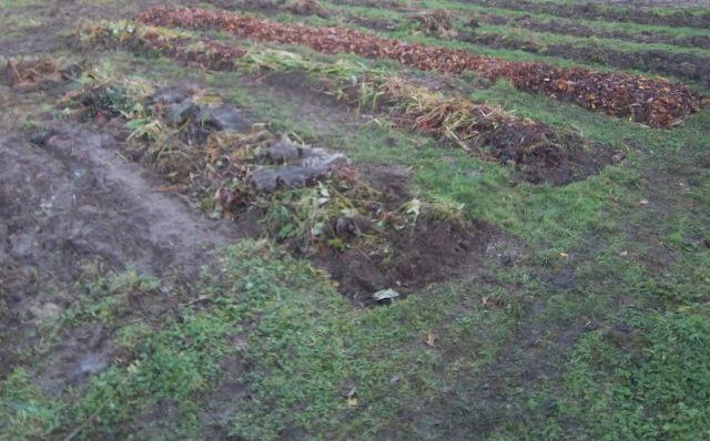 superposition de déchets verts, feuilles mortes, etc sur les buttes