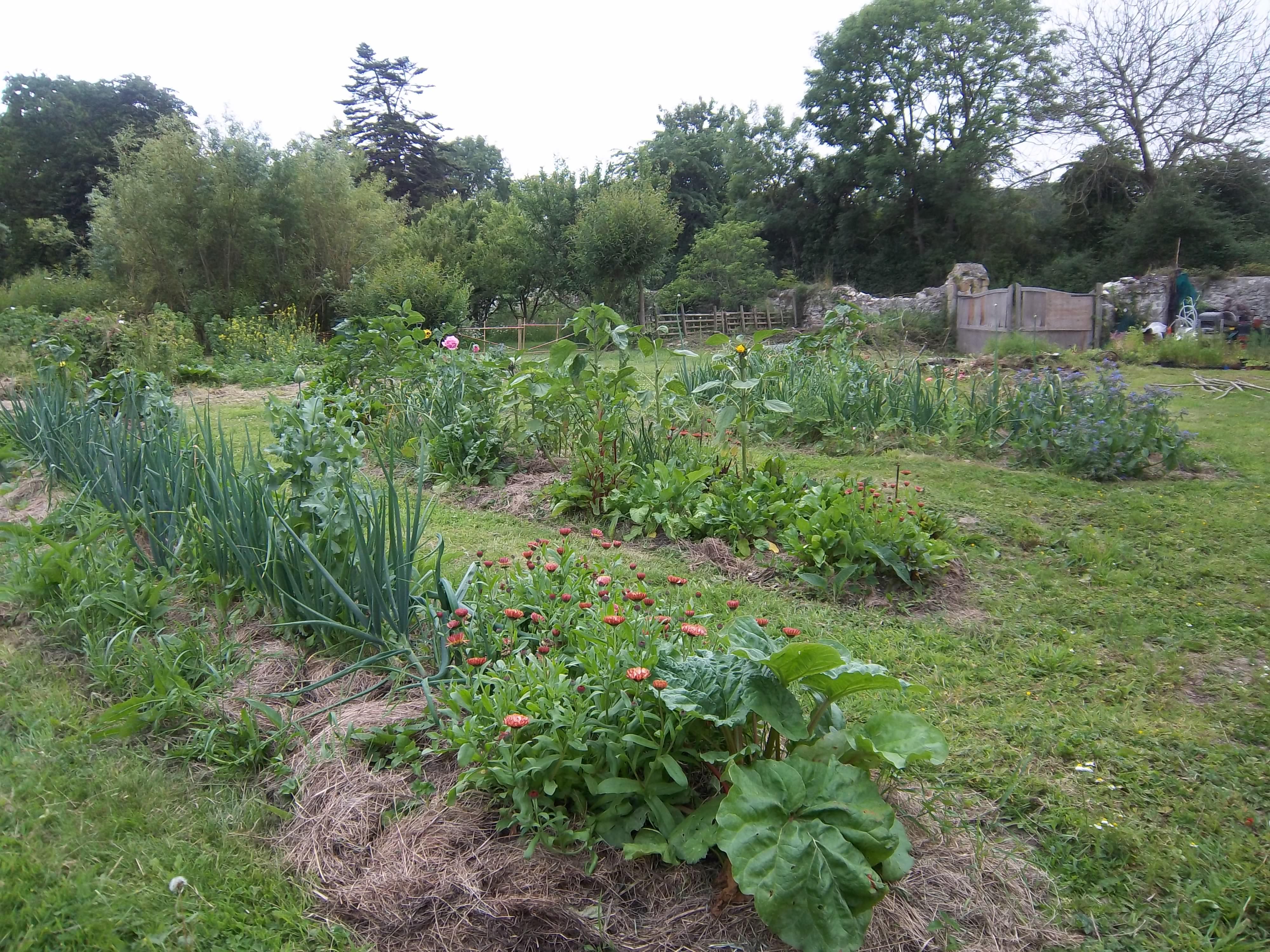 Le potager le jardin de bellenau for Au jardin potager