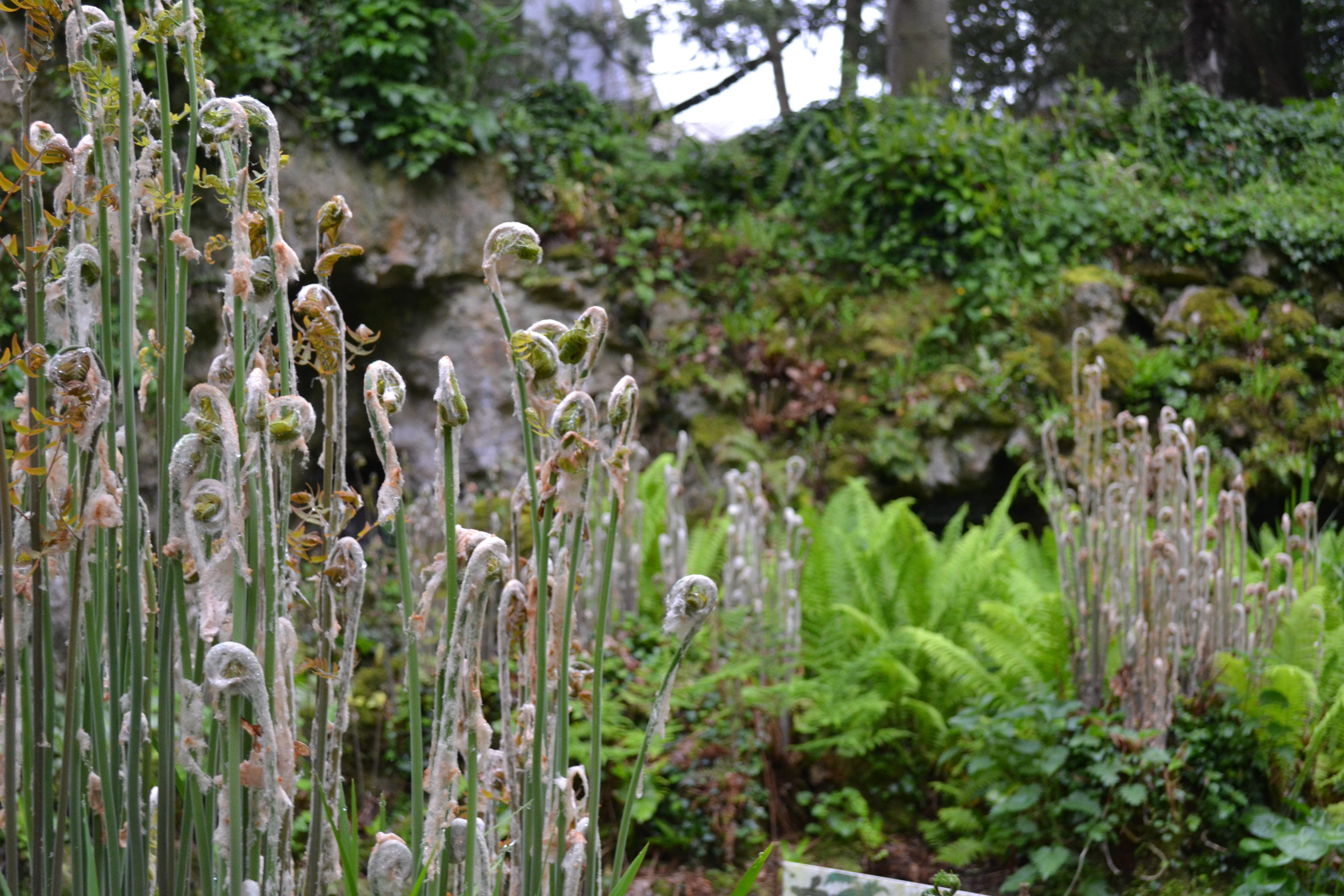 Le jardin de bellenau entre romantisme et modernit for Jardin ouvert ce week end